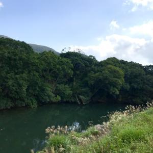 マングローブの森をカヌーで散策♪