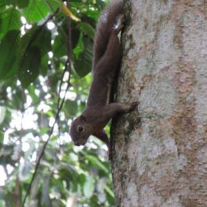 ヒヨケザルに会いに行こう!Bukit Timah Nature Reserveへ。