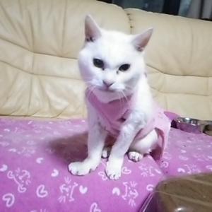 本日の御長寿猫、シロちゃん!!