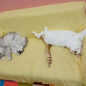 ソファーの上のフワリン君とミルキー君!!