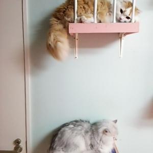 階段のココア様とフワリン君!!