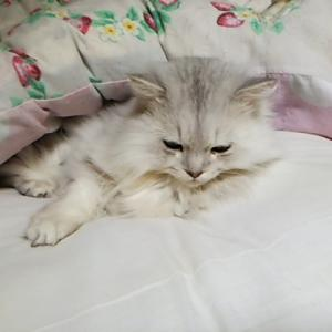 布団で眠る、フワリン君!!