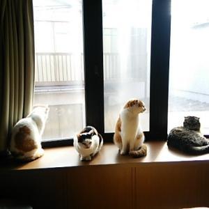 出窓の親子!!