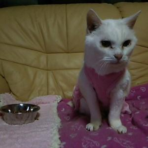 御長寿猫、シロちゃん!!