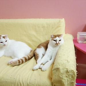 ソファーの上のコモモ君とミルキー君!!