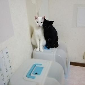 寄り添う、白と黒!!