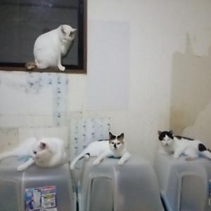 本日の猫部屋のニャンズ!!
