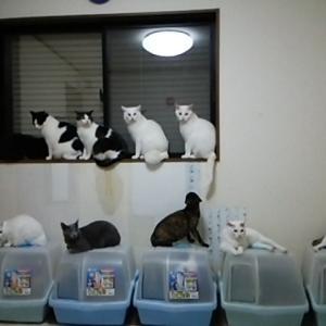 窓際のニャンズ!!