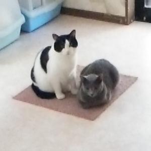 猫部屋のニャンズ!!