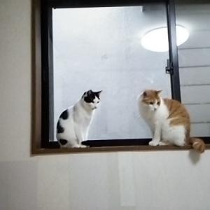 窓際の姫ちゃんと、マロン君!!