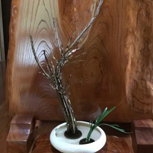 今季節 初めての水仙の格花  お生花
