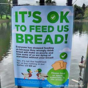 餌がないならパンをお食べ!