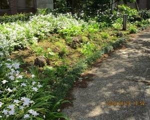 4月 29日 の Hosta Garden