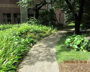 6月12日のHosta Garden