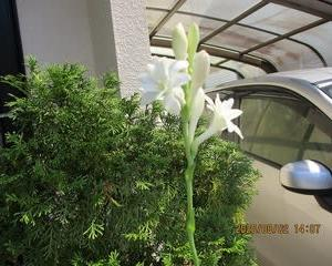わが家の草花、樹木、野菜というか植物をアップする。