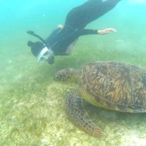 セブ島旅行の最終日はシュノーケリングで海亀三昧でした!