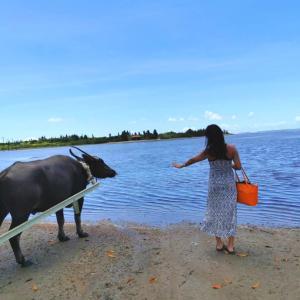 石垣島旅行後記★西表島で水牛車に乗ってきました。