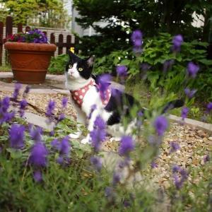 ハーネスの効用と夏の庭