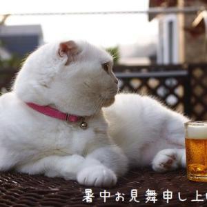 ビールを飲みながら 暑中お見舞い申し上げます