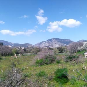 青と緑の原風景