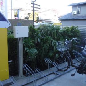 棕櫚竹の剪定