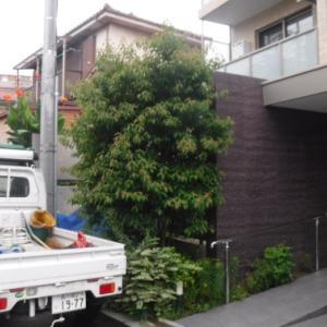 庭木の剪定と草刈り
