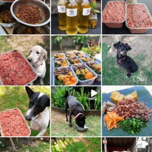 バクバク食べてくれた♪♪ 犬のご飯「Epoy Pet Food」