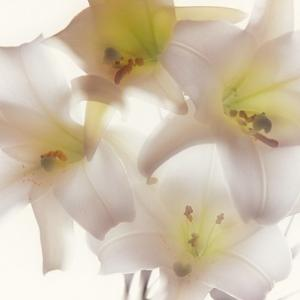 白い花をください