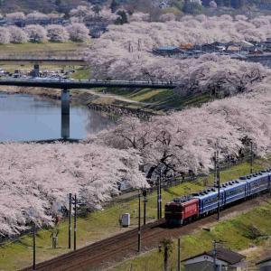 花めぐり 蔵王と満開の桜