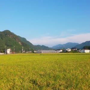 菅総理の「総裁選不出馬」報道の対応に追われました。