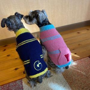 【生徒さん作品】かわいい犬の手編み服よりお揃いのセーターが完成!