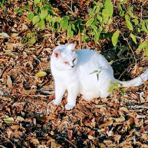 海辺で暮らしている白い猫