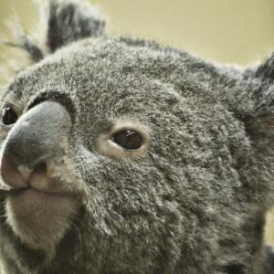 オーストラリア大火災で、今私たちが助かった動物たちに出来ること