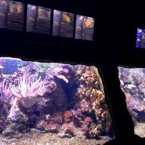 親子で一日楽しめます!Paris近郊の水族館『SEA LIFE』をご紹介