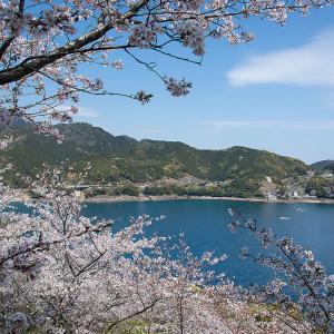 2020年4/7 鬼ヶ城の桜
