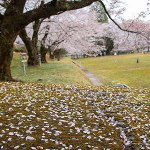 2021.3.26 熊野市神川町の桜