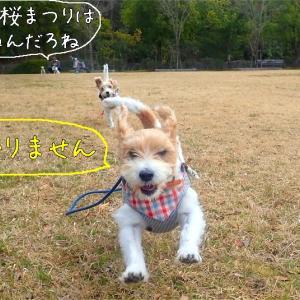 犬が感染!