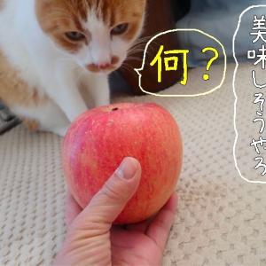 リンゴ怖い