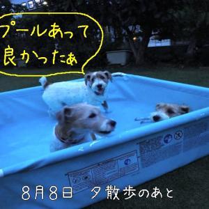 いきなりプール