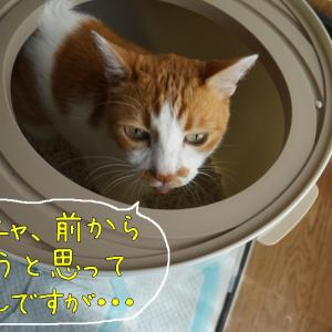 ぽむきちトイレ
