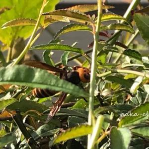 スズメバチかな?