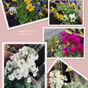 ひさしぶりの花の苗購入