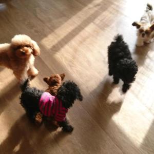 子犬の運動会
