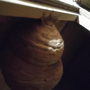家の中に蜂の巣 ...