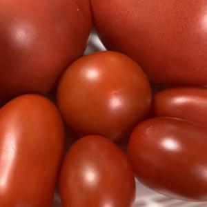 桐屋菜園 完熟トマト