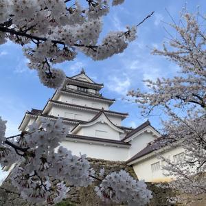 会津鶴ヶ城 千本桜 2021.4.7