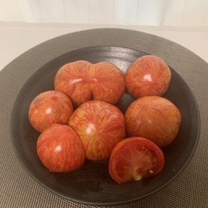 桐屋菜園 トマト ドラゴンアイ 会津山塩