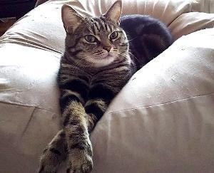 新しいものに慎重な猫と新しいもの好きな猫