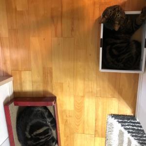 箱猫ツインズ