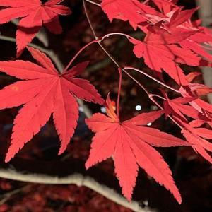 富士五湖ドライブと紅葉